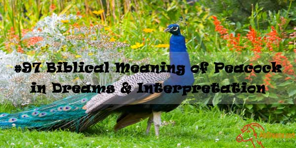 #97 Biblical Meaning of Peacock in Dreams & Interpretation