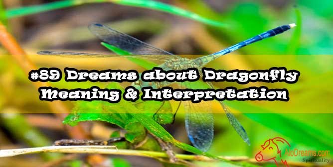 #89 Dreams about Dragonfly : Meaning & Interpretation